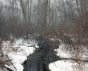 Sheough Swamp, Mill Neck, New York, 2011 thumbnail