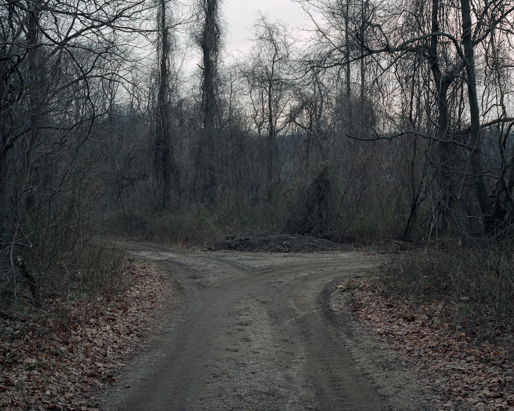 Forked path, Lloyd Harbor, New York, 2010